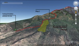 Lokasi Habitat Lutung Jawa di Jalur Selo